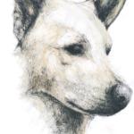 O cão de palheiro que foi